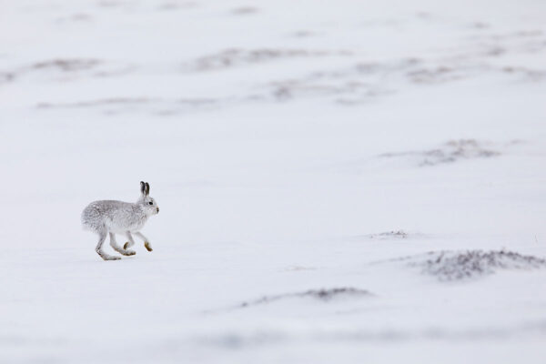 Wildlife photo prints - On the run
