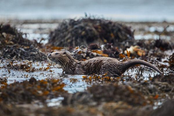 Wildlife prints - Taking a dip