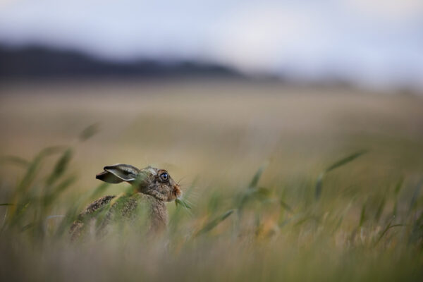 Wildlife prints - Wild & free